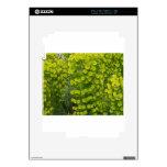 Wulfenii de los characias del euforbio iPad 2 skin