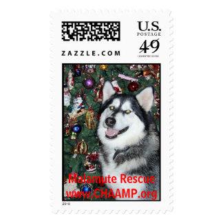 wulfgar, Malamute Rescuewww.CHAAMP.org Stamp