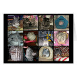 Wunderchins 2012 notecards tarjetas
