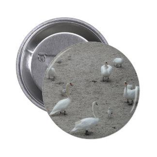 Wunderschöne Vögel Pin Redondo 5 Cm
