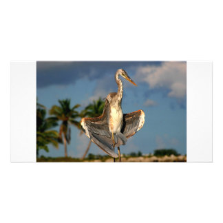 Wurdermann's Heron in funny flashing pose. Photo Greeting Card