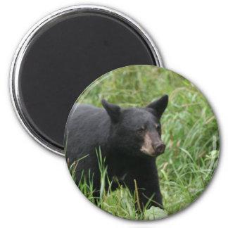 www blackbearsite com imán de nevera