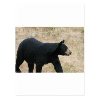 www.blackbearsite.com postcard