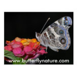 www.butterflynature.com post cards