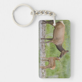 WY, Yellowstone National Park, Elk calf and Key Chains