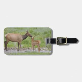 WY, Yellowstone National Park, Elk calf and Luggage Tag