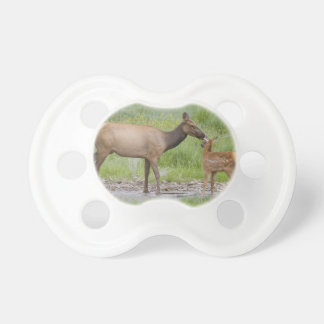 WY, Yellowstone National Park, Elk calf and Pacifier