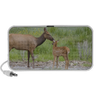 WY Yellowstone National Park Elk calf and Portable Speakers