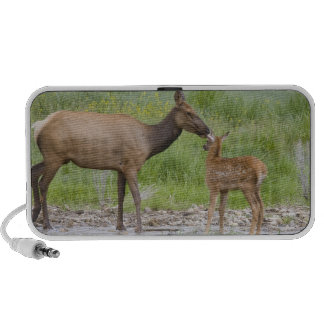 WY Yellowstone National Park Elk calf and Speaker