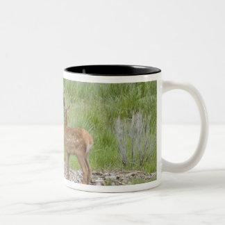 WY, Yellowstone National Park, Elk calf and Two-Tone Coffee Mug