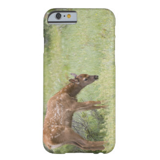 WY, Yellowstone National Park, Elk calf in Barely There iPhone 6 Case