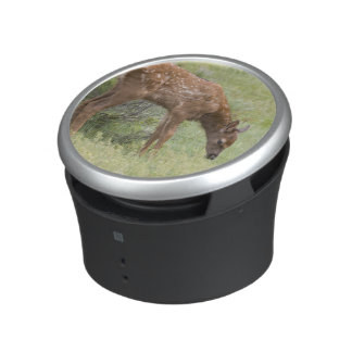 WY, Yellowstone National Park, Elk calf in Bluetooth Speaker