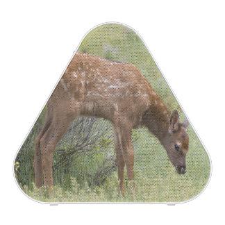 WY, Yellowstone National Park, Elk calf in Bluetooth Speaker