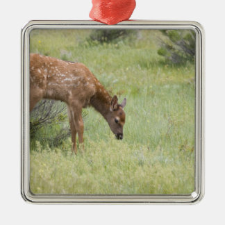 WY, Yellowstone National Park, Elk calf in Metal Ornament