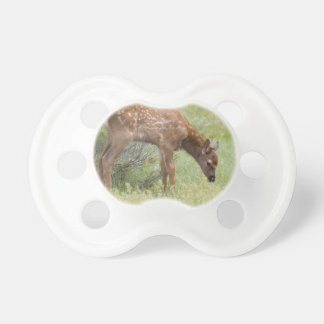 WY, Yellowstone National Park, Elk calf in Pacifier