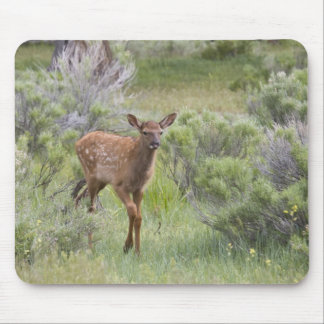 WY, Yellowstone National Park, Elk calf Mouse Pad