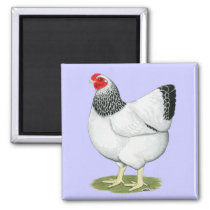 Wyandotte:  Columbian Hen Magnet