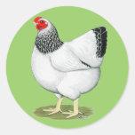Wyandotte:  Columbian Hen Sticker