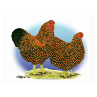 Wyandotte:  Golden-laced Pair Postcard