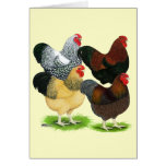 Wyandotte:  Rooster Assortment Stationery Note Card