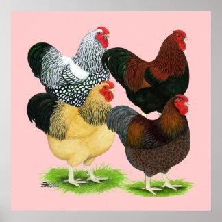Wyandotte:  Rooster Assortment Print