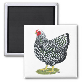 Wyandotte:  Silver-laced Hen 2 Inch Square Magnet