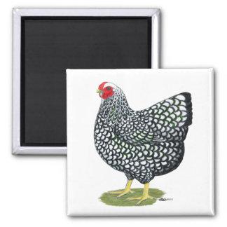 Wyandotte:  Silver-laced Hen Magnet
