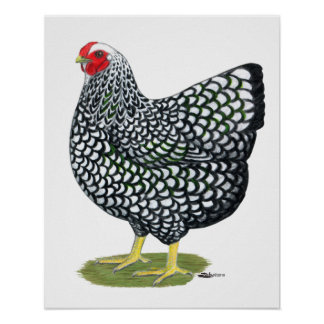 Wyandotte:  Silver-laced Hen Poster