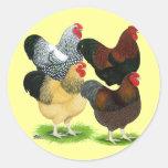 Wyandotte:  Surtido del gallo Pegatina Redonda