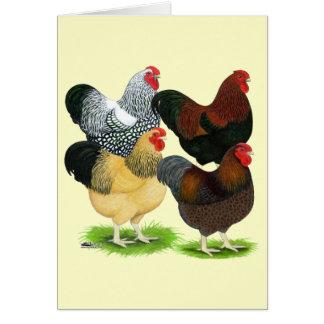 Wyandotte:  Surtido del gallo Tarjeta Pequeña