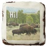 Wyoming Bison Nature Animal Photography Chocolate Brownie
