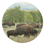 Wyoming Bison Nature Animal Photography Eraser