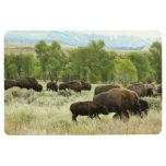Wyoming Bison Nature Animal Photography Floor Mat
