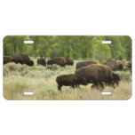 Wyoming Bison Nature Animal Photography License Plate