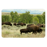 Wyoming Bison Nature Animal Photography Magnet