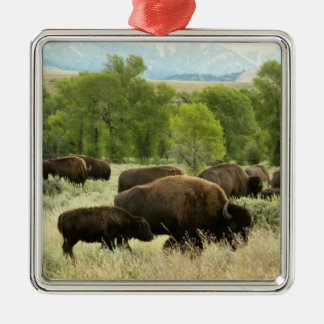 Wyoming Bison Nature Animal Photography Metal Ornament