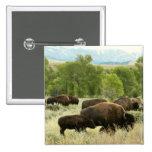 Wyoming Bison Nature Animal Photography Pinback Button