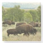 Wyoming Bison Nature Animal Photography Stone Coaster