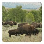 Wyoming Bison Nature Animal Photography Trivet