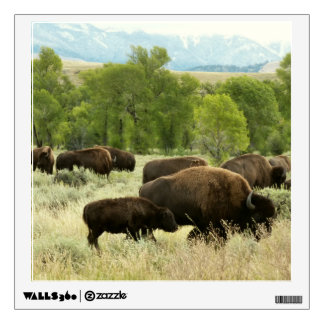 Wyoming Bison Nature Animal Photography Wall Sticker