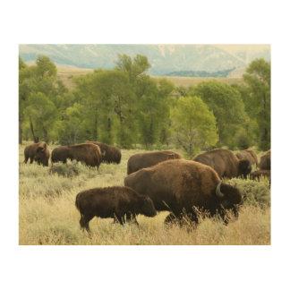 Wyoming Bison Nature Animal Photography Wood Wall Art