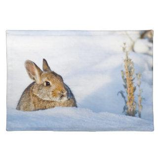 Wyoming, el condado de Sublette, el conejo de rabo Manteles Individuales