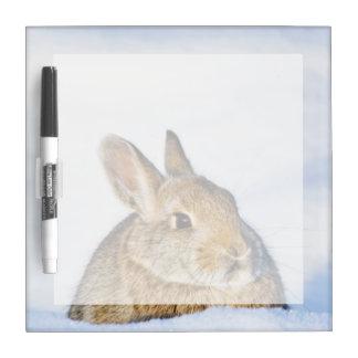 Wyoming, el condado de Sublette, el conejo de rabo Pizarras Blancas