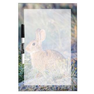 Wyoming, el condado de Sublette, el conejo de rabo Pizarra