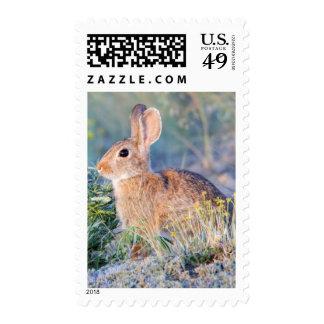 Wyoming, el condado de Sublette, el conejo de rabo Sello