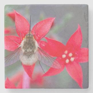 Wyoming, el condado de Sublette, mosca de abeja Posavasos De Piedra