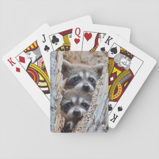 Wyoming, Lincoln County, Raccoon Deck Of Cards