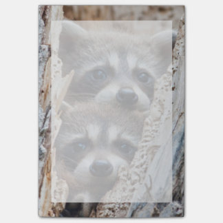 Wyoming, Lincoln County, Raccoon Post-it Notes