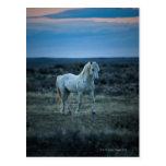 Wyoming, los Estados Unidos de América Tarjeta Postal