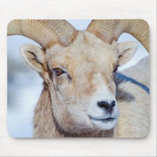 Wyoming, National Elk Refuge, Bighorn Sheep Ram Mouse Pad